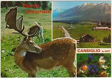 PARCO NATURALE CANSIGLIO - VEDUTINE (BELLUNO) 1981