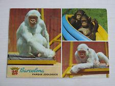 Zoo Barcelona white albino gorilla chimp parq zoologico