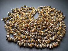 Lot 10 Genuine Baltic Amber Baby Necklace 12.20 - 13.00 inches