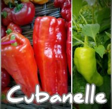 (25+) Cubanelle Pepper Seeds