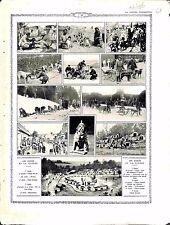 Chiens de Guerre Dogs War Ratier Porteur de Pli Brancardiers Chenils  1916 WWI