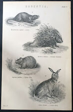 Mackenzie & Co Original 1870 Antique Print of Coypu, Porcupine & Hare's