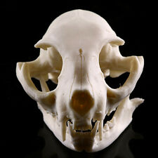 Realistic Resin Cat Skull Replica Medical Teaching Skeleton Model Collectibles