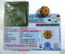 8 MUKHI RUDRAKSHA / EIGHT FACE  RUDRAKSH JAVA BEAD LAB CERTIFIED 14 - 16 MM SIZE