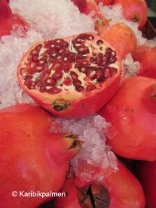 Punica granatum 'Mollar de Elche'- Granatapfelbaum  Pflanze 150-170cm -12° Frost