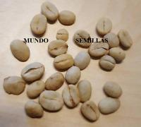 CAFE - coffea arabica - cultiva tu propio cafe de calidad - 10 semillas