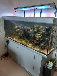 Meerwasseraquarium gebraucht