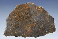 Meteorite NWA 11757 - Primitive achondrite : Ureilite 5.28g slice