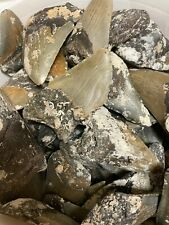 BULK MEGALODON TOOTH SHARDS AND FRAGMENTS 1/4, 1/2, And 3/4 Teeth