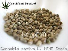 Certified Hemp Seeds Garden Growing Cannabis Sativa Hundreds of Seeds 10 grams