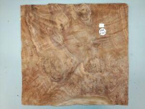 CONSECUTIVE SHEETS OF AMERICAN BURR WALNUT VENEER 34 X 36 cm AM #263 MARQUETRY