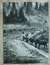 AB) Blatt 2.WK Gebirgsjäger Edelweiss 1941 Gebirgs-Division Batterie Marsch Muli