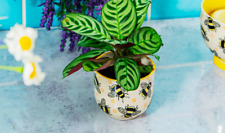 Bee Flower Plant Pot Ceramic Planter Indoor Outdoor plant Pot Gift Busy Bees NEW