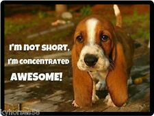 Dog Humor Beagle I'm Not Short Refrigerator Magnet
