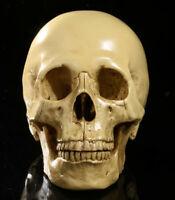 Life-size 6.5''Realistic Human Skull Replica 1:1 Anatomical Skeleton Head Yellow