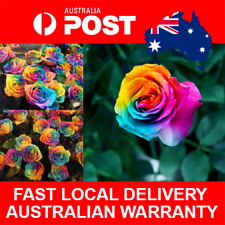 20+ Rainbow Rose Seeds Grow Roses Seed Pack