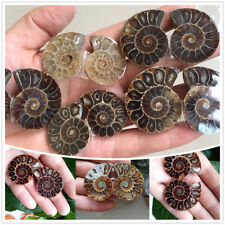1pair Druzy Ammonite Slice Shell GEMSTONE Madagascar Sea Natural Specimen