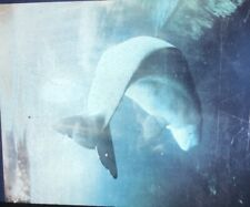 """Sheldon Brody """"White Whale"""" Photography 35mm Slide"""
