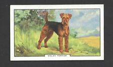 GALLAHER - DOGS, 2ND SERIES - #7 WELSH TERRIER