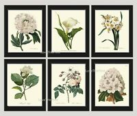 Unframed Botanical Print Set of 6 Antique White Garden Flowers Wall Art Decor