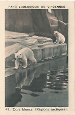 41. Ours blanc Polaire Ursus maritimus Polar bear IMAGE CARD BON POINT 30s