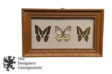 """3 Beautiful Mounted Taxidermy Framed Butterflies Insect Home Decor 12"""""""