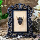 Y97E Taxidermy Oddities Curiosities real Mouse Head Mount Framed home decor