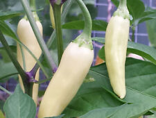 Golden Greek Pepperoncini - A Chilli Used in Most Pizza and Sandwich Shops