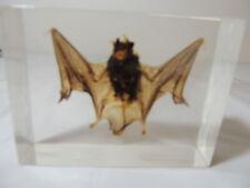 BAT IN RESIN WIERD