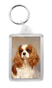 Cavalier King Charles Spaniel (Blenheim) Dog Photo Keyring Keyfob Key Ring