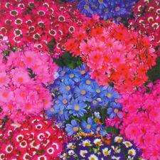 30pcs Floret Senecio Cruentus Cineraria Seeds Pericallis Colorful Flower Garden