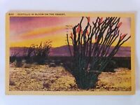 1947 Ocotillo in Bloom on the Desert Linen Postcard Sunset