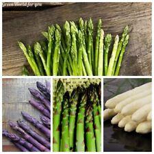 50Pcs Asparagus Vegetable Seeds Rare 4 Kinds Tasty Garden  Potted Organic Plants