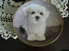 The Danbury Mint Cherished Maltese Collectible Plate Adoring Eyes