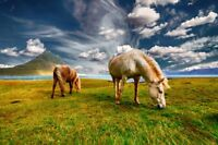 """perfect 36x24 oil painting handpainted on canvas""""Horses on the prairie """" @N10144"""