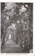 Middlesex Postcard - Queen Mary's Bower - Hampton Court Palace    XX853