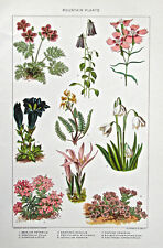 Julius Bien 1902 Chromolithograph (VI) Mountain Plants