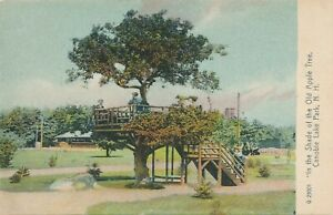 SALEM NH – Canobie Lake Park In the Shade of the Old Apple Tree – udb (pre 1908)