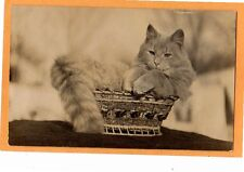 Real Photo Postcard RPPC - Animal - Large Cat in Small Basket