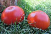 10 graines de tomate rare Reine de la Ferme super productive heirloom tomato
