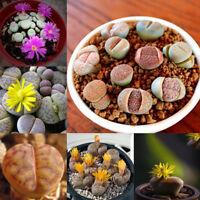50pcs Lithops Living Seed Desktop Green Plants Pot Home Yard Garden Seeds Decor