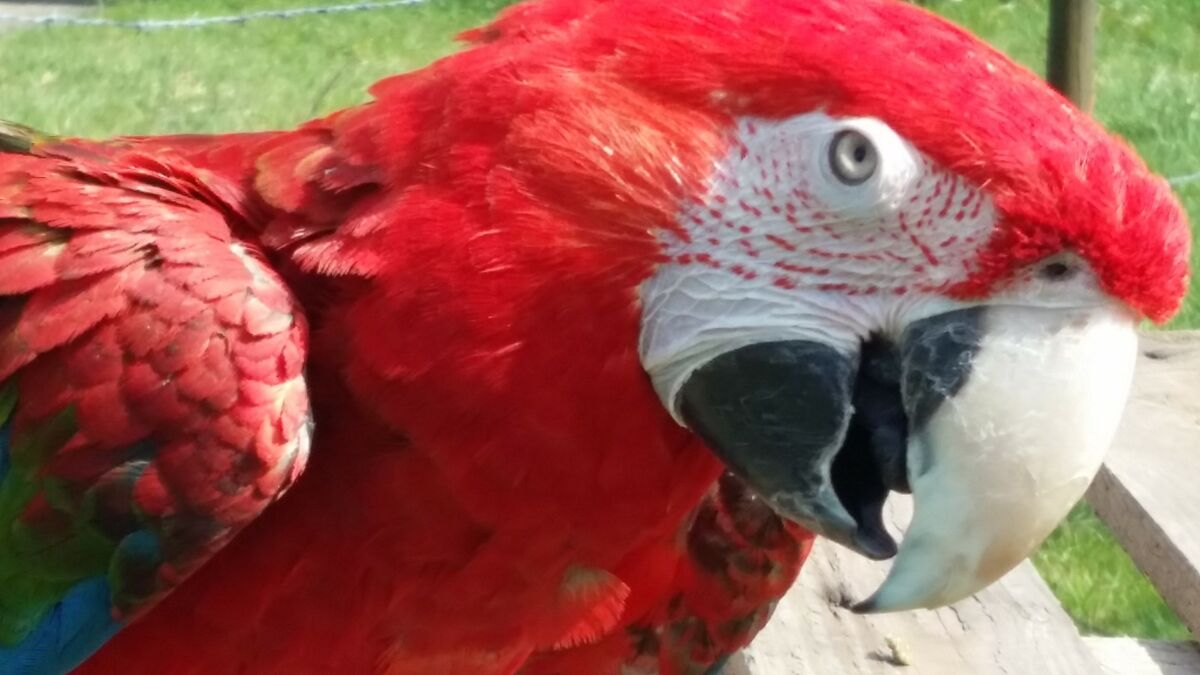 A One Parrot Rescue Marketplace