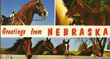 NEBRASKA NE Greetings from Horses Foal postcard