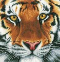 "LanArte Counted Cross Stitch Kit 14""X13.6 Tiger on Aida (27 Count 499992722012"