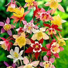 Seeds Rare Aquilegia Mix Columbine Flower Perennial Garden Cut Organic Ukraine