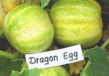 """weiße GURKE Dragon Egg """"Cucumis sativus"""" für Topf, Kübel, weisse runde Gurke"""