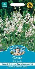 Francoa sonchifolia 100 semi-Corona da sposa//matrimonio fiore