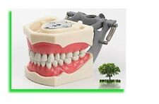 Dental Typodont Model 860 compatible with Columbia brand teeth