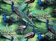 FAT QUARTER  PEACOCK FABRIC PAGEANT OF COLOR PEACOCKS QUILTING COTTON WILD WINGS