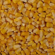Morning Bird Whole Corn (20 lb)